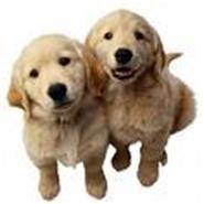 Pets Pantry Pet Shops